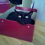 Molly Yohm, Official Medical Intuitive's Cat